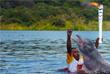 Дельфин стал одним из участников эстафеты олимпийского огня в городе Ирандуба, штат Амазонас
