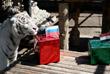 Бенгальский белый тигр Хан из зоопарка Красноярска верит в победу сборной России над Египтом. Команды встретятся на поле 19 июня в Санкт-Петербурге.