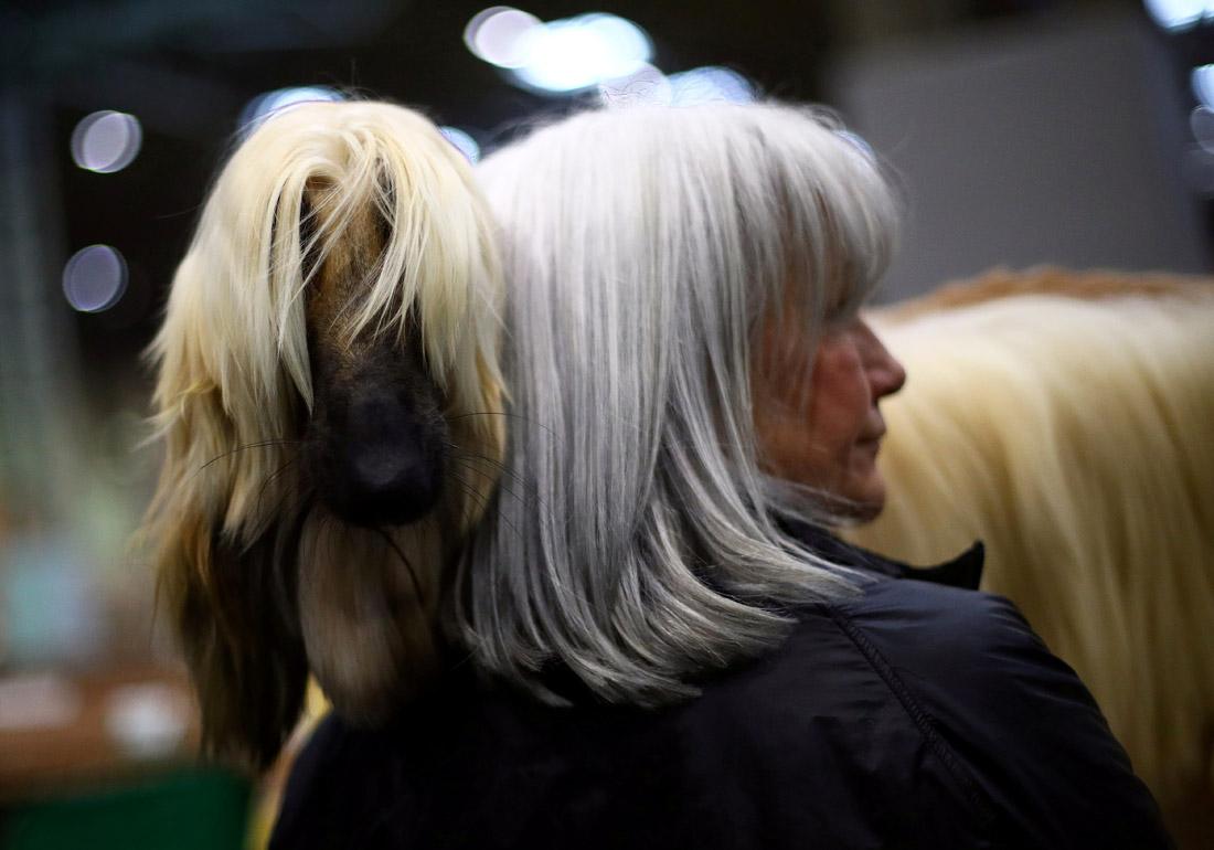 Выставки собак Crufts в британском Бирмингеме