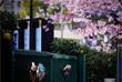 6 марта. В японских городах Токио и Осака отменили фестиваль цветения и любования сакурой из-за вспышки вируса. Традиционно в апреле в эти два города стекаются миллионы туристов, чтобы полюбоваться деревьями в белых и розовых цветах.