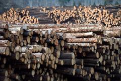 Госкомпанию по экспорту леса создадут до конца 2021 года