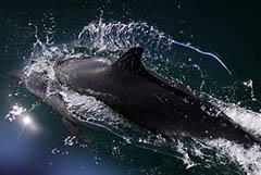 В РФ запретят промышленный вылов китов и дельфинов