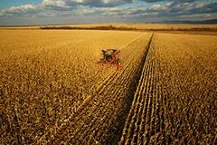 Эксперты предсказали падение выручки аграрного комплекса РФ на 40%