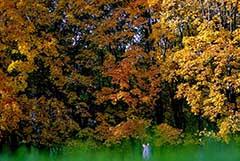 Москвичам пообещали теплую солнечную погоду в конце октября - начале ноября
